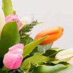 trendy Tulip Close Up